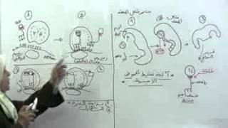 getlinkyoutube.com-5 تنشيط الحموض الأمنية و مراحل حدوث الترجمة