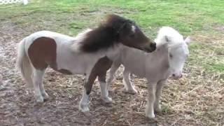 getlinkyoutube.com-Get Off Of My Back