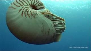 getlinkyoutube.com-Nautilus