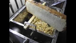 getlinkyoutube.com-распечатывание медовых сотов - использую пчеловодную вилочку