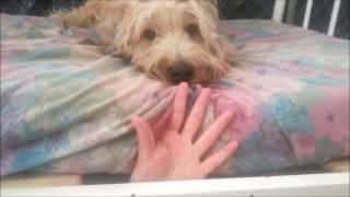flushyoutube.com-FurKids Doggy Daycare
