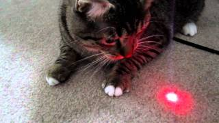 getlinkyoutube.com-Laser Cat!!!