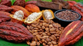 getlinkyoutube.com-Cómo Cultivar Cacao Orgánico - Por Juan gonzalo Angel - TvAgro