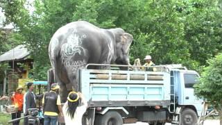 getlinkyoutube.com-ดูช้างขึ้นรถบรรทุก