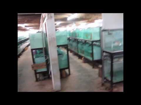 Local Goverment Ornamental Fish Farming Project (by Marine Reef Solutions)