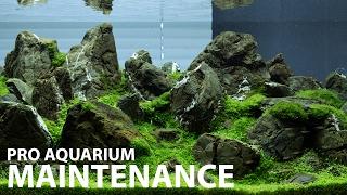 getlinkyoutube.com-Aquarium maintenance in 1 hour at Green Aqua - 240L display
