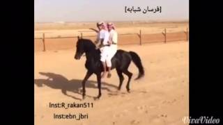 getlinkyoutube.com-ابن جبري و ولد روق (فرسان شبابة)