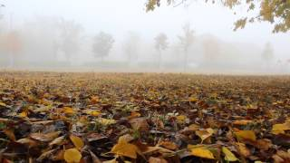 Autumn misty park
