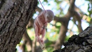 getlinkyoutube.com-Baby Squirrel Saved From Death in Kruger - 14 December 2012 - Latest Sightings