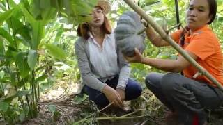 getlinkyoutube.com-สวนเกษตร - ซุปเปอร์มาเก็ตรอบบ้าน