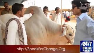 getlinkyoutube.com-Chalta Rahi - Bakra Mandi