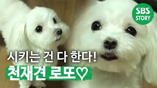 getlinkyoutube.com-TV동물농장 천재견 로또(522회)_01