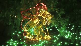 getlinkyoutube.com-Sexual Zoolights and my Confession
