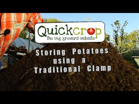 Traditional Potato Clamp