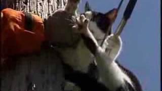 getlinkyoutube.com-猫落下事件 accidents of fallen cats