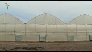 getlinkyoutube.com-Advanced Greenhouses  -  Dagan Agricultural Automation Ltd.