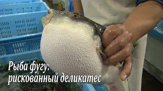 getlinkyoutube.com-Рыба фугу: рискованный деликатес / Fugu-fish: risky Japanese delicacy / フグ