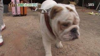 getlinkyoutube.com-킹, 황구와 백구 첫만남 @TV동물농장 20130707