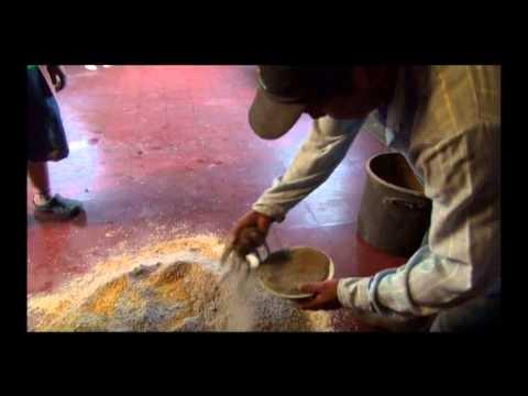 Producción de pollo de engorde con concentrados alternativos y pastoreo