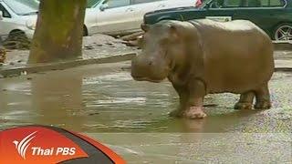 getlinkyoutube.com-สัตว์หลุดออกจากสวนสัตว์ในจอร์เจียเหตุจากน้ำท่วมหนัก