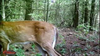 getlinkyoutube.com-bigfoot trail cam results