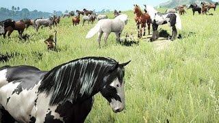 getlinkyoutube.com-Black Desert Online: Horse Taming (OBT KR)