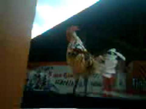 Ayam ketawa Bakka Kuntilanak kristal.3gp