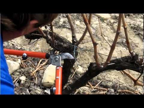 Cómo Podar un Viñedo en Espaldera - Bodegas Urbina La Rioja