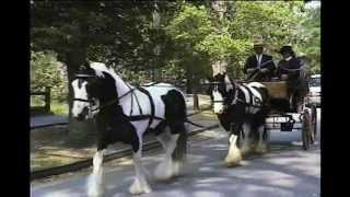 getlinkyoutube.com-Introduction to the Sport of Carriage Driving