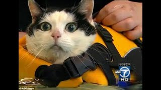 getlinkyoutube.com-News Anchor Can't Control Herself - Holly the Swimming Cat