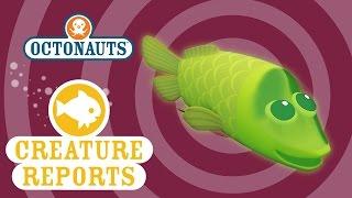 getlinkyoutube.com-Octonauts: Creature Reports - Spookfish