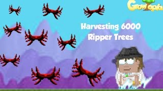 getlinkyoutube.com-Growtopia   Harvesting 6000 Ripper Trees