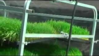 getlinkyoutube.com-Guía para la produccion intensiva de Forraje Verde Hidroponico