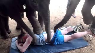 getlinkyoutube.com-Elephant Rape