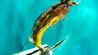 getlinkyoutube.com-Tying the McPhail Caddis Pupa by Davie McPhail (HD)