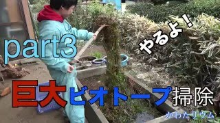getlinkyoutube.com-巨大流木ビオトープ3