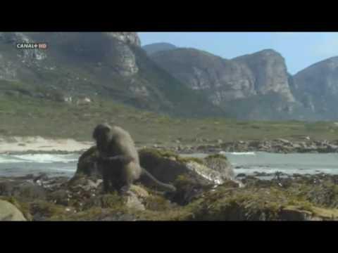 [10/10] Life BBC - primates 4/5