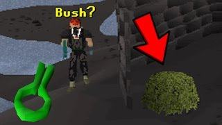 getlinkyoutube.com-Runescape Sparc Mac's Bush Human Bombing Adventures!