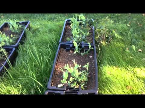 Jardinage d'automne dans la serre