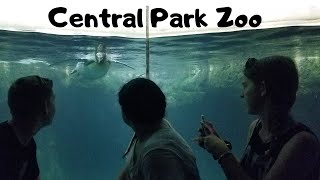 Central Park Zoo with Brandon & Skylar - May 2017