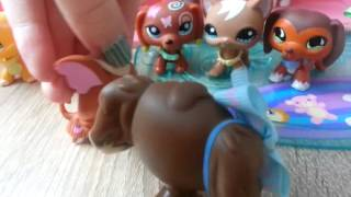 "getlinkyoutube.com-LPS : ""Zakręceni"" #19 Littlest Pet Shop !"