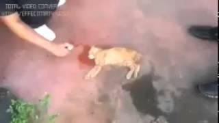 getlinkyoutube.com-kesan garam dicampurkan air kepada kucing jalanan yang keracunan makanan