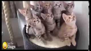 getlinkyoutube.com-Funny Cats Better Than Funny Pranks Funny Cat Videos