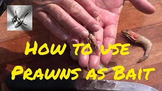 getlinkyoutube.com-How to use Prawns as bait | The Hook and The Cook