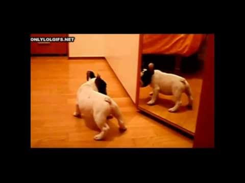 Video de perros y gatos graciosos - Funny dogs and cats