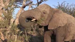 getlinkyoutube.com-Sound of the African Bushveld, Elephants - AFRICAN WILDLIFE