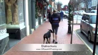 "getlinkyoutube.com-Doberman ""Chloe:"" Can You Fit More Distractions In A Video! Best Dog Training in Northern Virginai"