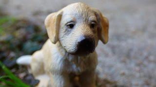 getlinkyoutube.com-[Revue n°3 :] Mes chiens et chats Schleich 🐶