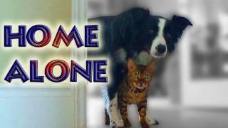 getlinkyoutube.com-Home Alone with Nana & Kaiser