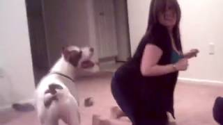 getlinkyoutube.com-Girl playing with a pitbull dog xx